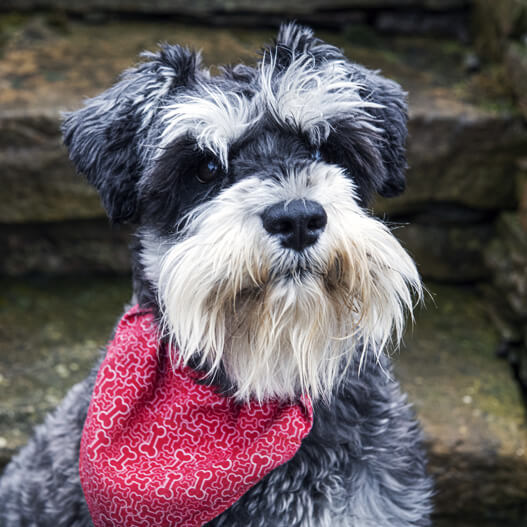 Mr MacKintosh - Dunnet Bay Distillery Dog